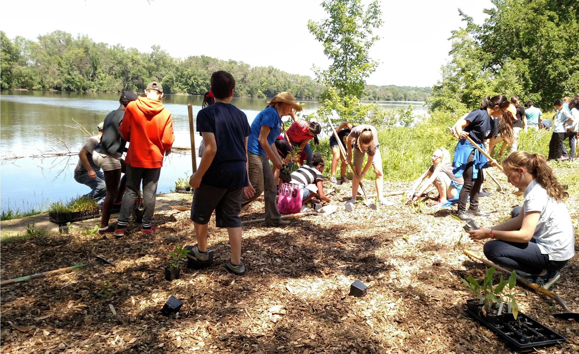 Students from City High Middle plant native plants along the Grand River
